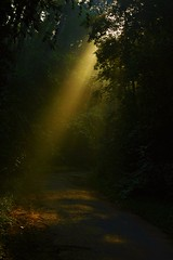 Just Rays (mon3yhunt3r) Tags: trees forest dark outdoor path serene rays sunray lonelypath