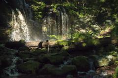 (Onejoshuatree) Tags: mountain green nature japan landscape waterfall  nippon     hyogo     westjapan  shinonsentyo  sarubowaterfall