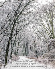 Psalm 25.4-5..... A winters walk of faith (TAC.Photography) Tags: scripture intothewoods winterscene snowypath psalm2545