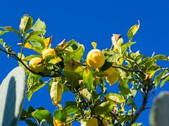 Lemon (Christoph Strssler) Tags: es 169 mallorca spanien estellencs islasbaleares mallorca2016