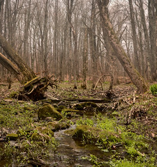 Waking Up (flashfix) Tags: trees panorama usa newyork green nature water creek forest landscape mexico spring woods nikon rocks 40mm baretrees mothernature uprooted 2016 mossyrocks d7000 derbyhillbirdobservatory 2016inphotos april292016
