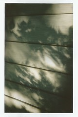 (kristen cynthia) Tags: trees summer abstract shadows instantphotography fujifilminstax