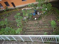 OPC 220116 023 (Jusotil_1943) Tags: fences huerta opc220116