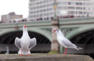 Gulls Behaving Badly! [Explored!]