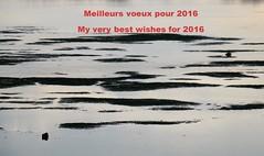 Tous mes voeux pour 2016  mes amis Flickerinos. (Marie-Hlne Cingal) Tags: france 40 labenne landes sudouest aquitaine orx
