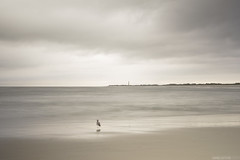 I hate that you're gone (danielritchiephoto) Tags: longexposure travel sea sky seascape beach beautiful beauty clouds landscape coast newjersey sand waves seagull nj sombre capemay somber
