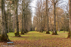 Lime Avenue (Pebbles 01) Tags: westonbirt