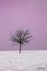 colorful_winter (Lucygrafie) Tags: winter snow field landscape colorful fotografie fineart winterwonderland fineartphotography fineartprint lucygrafie