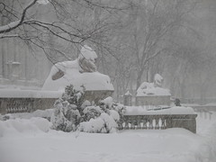 Snowstorm Lions New York Public Library - 2016 NYC 5742 (Brechtbug) Tags: birthday street new york nyc winter sculpture cats snow storm art public hat weather animal st statue cat real during feline library snowstorm january lion saturday ave elements lions snowing avenue blizzard 5th 42nd blizzards 2016 braving 01232016