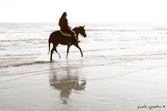 la treccia (paolo agostini) Tags: sea bw beach sepia 50mm drops mare bn cavalli spiaggia coda chioggia riflesso seppia sottomarina spruzzi treccia battigia