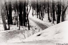 Snow (Giuseppe Moschetti.) Tags: christmas trees winter snow cold tree alberi nikon neve tele inverno natale freddo giuseppe foresta d810 moschetti 1424mm delsjn2016snow