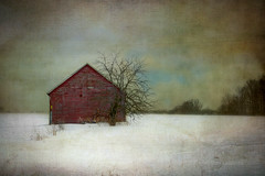 Cold and Lonely (Tom Landretti) Tags: winter snow tree texture field wisconsin farm country redshed coldandlonely centralwisconsin
