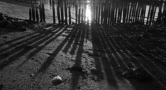 shining through (krøllx) Tags: light sunset blackandwhite bw nature water lines norway fence landscape pier shadows outdoor simple trondheim sørtrøndelag trøndelag ranheim tangenfjæra 1508060046