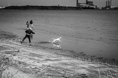 the run (erzsebet kiraly) Tags: ireland sea blackandwhite bw dublin dog chien mer white black canon seaside play dynamic running seafront playful sandymount dogrunning 40d canon40d