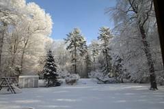 Winter Serenity (Read2me) Tags: winter snow white she cye pregamewinner yard trees landscape bluesky thechallengefactory gamewinner challengeclubwinner