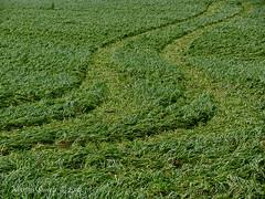 Afdruk in de wei - Print in the meadow (Marian Smeets) Tags: green lines groen belgium belgie meadow structure gras wei lijnen 2016 structuur leut nikoncoolpixs9100 mariansmeets
