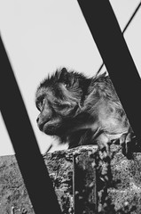 Look out! (aurgho_) Tags: india animal monkey