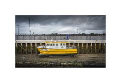Noah takes a walk...... (silver/halide) Tags: dog yellow boat dock cornwall stives pram pushchair walkies kernow hayle johnbaker sonyalpha a6000 hayleharbour islabea