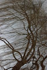 NUDE TREE (ben.fossey) Tags: winter reflection tree vent gris solitude wind reflet sombre lonely combat tension extrieur arbre mouvement tronc branche tempte graphique lments bndictefossey