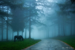 Baja visibilidad (Mimadeo) Tags: road wood trees light horse sunlight mist tree nature misty fog night danger rural forest dark way landscape countryside twilight risk path country gothic bad foggy nobody scene route lane caution asphalt hazardous visibility conditions lowvisibility