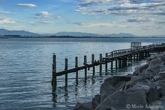 The Old Jetty (M J Adamson) Tags: ocean sea newzealand jetty nz oldjetty southcanterbury carolinebay