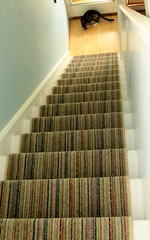 16-02 Stair runner 006 (alasdair massie) Tags: home carpet stair barton