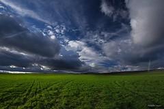 La luz (Anpegom fotografa) Tags: verde green cereales palencia cebada dueas anpegom