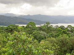 Arenal Lake, Arenal Volcano, Costa Rica IMG_0899 (Hart Walter) Tags: rainforest birdwatching fortuna socialflycatcher iguanas epiphytes euphonia tropicalforest arenalvolcano costaricanature swalowtailedkite paraisoresort misticohangingbridgespark