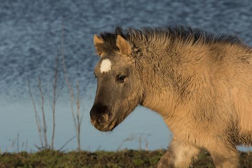 Horses Insight  (13)