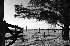La Esperanza PC (Max Rabuini) Tags: bw tree byn blancoynegro argentina atardecer campo tranquera serenidad laesperanza opengate