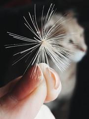 cat gato galaxyj7 (Photo: Cindy Luna on Flickr)
