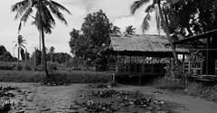 Bangkok (kitan) Tags: rural bangkok palmtree tropical kohkret thailandtravelasia