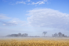 morning on the farm (Barbara A. White) Tags: ontario canada clouds landscape spring cornfields woodlawn