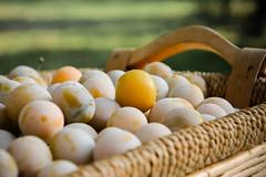 Mirabelles (Dorian Duplex) Tags: original fruit plante soleil solitude bokeh jardin champ ble demarcation