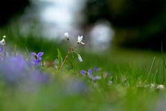 JLM_1973 (My world, as I see it.) Tags: flowers people macro nikon wee 105 f28 d7100
