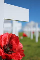 IMG_0646 (eve_manning) Tags: park autumn newzealand auckland poppies domain anzac aucklandwarmemorialmuseum