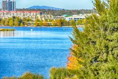 Autumn leaves on Lake Ginninderra (garydlum) Tags: au australia canberra belconnen australiancapitalterritory lakeginninderra
