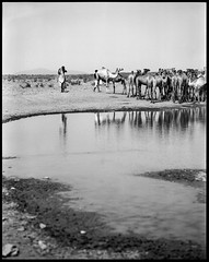 nomad with his herd of camels (nahlinse) Tags: people film mediumformat landscape iso100 camel ethiopia livestock nomads fujineopanacros100 film:brand=fuji film:iso=100 developer:brand=adox film:name=fujineopanacros100 adoxadonal developer:name=adoxadonal filmdev:recipe=9369 fuijineopanacros