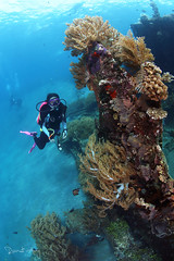 Wreck (Randi Ang) Tags: bali canon indonesia point photography eos underwater angle wide dive scuba diving fisheye ang wreck 15mm randi 6d javanese amed