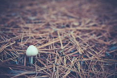Hello There (QuintonHurstPhotography) Tags: hello life park plant art nature mushroom outdoors photography living artwork flora natural state outdoor earth thing fineart fine fungi fungus there arkansas fineartphotography thegreatoutdoors