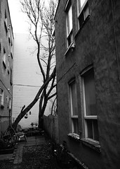 Arbres de Villeray, Montral (Richard Lehoux) Tags: blackandwhite bw canada tree blackwhite noiretblanc montreal streetphotography arbre noirblanc villeray