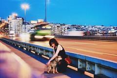 #girl #with #dog #Brankov #most #car #lights #moving (annabochkareva) Tags: dog girl car lights moving with most brankov