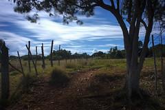 Backyard long exposure (GOJR.) Tags: inexplore firecrest16stopnd longexposure nikon d700 nikon357028