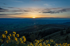 Peaking Sun (JustinMullenPhotography) Tags: morning flowers wild sky sun nature beautiful grass yellow clouds sunrise landscape natural hiking hike hills serene rise peaking