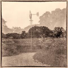 Windmill (arubio10) Tags: trees film blackwhite kodak path doubleexposure brownie hawkeye ilfordfp4plus filmisnotdead