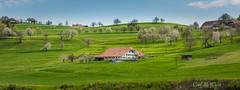 somewhere near Bern (McWhite) Tags: blue trees tree green landscape schweiz switzerland suisse blossom farm bloom farmer svizzera