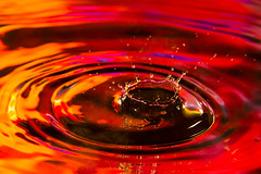 Ruby Crown Water Drop (Steven Green Photography) Tags: abstract water modern photography colorful wallart abstractphotography wetwork waterdropphotography