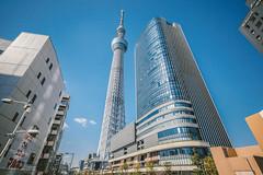 TOKYO SKYTREE__4 (hans-johnson) Tags: travel blue sky white tree tower japan tokyo asia landmark   16mm  sumidagawa sumida  kanto    sumidaku           skytree        tokyoskytree