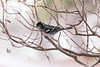 hidden (memories-in-motion) Tags: bird nature animal forest iso400 branches natur sigma hidden finch tele lapalma äste wald fink tier vogel f35 zweig 150mm singvogel 11250sec fringillacoelebspalmae sigmaex150mmf28dgoshsmapomacro
