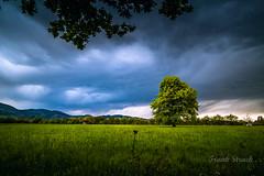 Regenwolken ber dem Schwarzwald (strack_frank) Tags: field clouds wonderful landscape outdoor pflanze feld himmel wolken samsung berge gras landschaft schwarzwald blackforest baum nx30